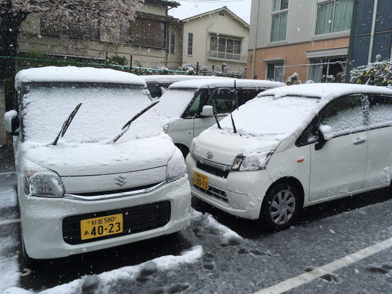 雪が降りました!!