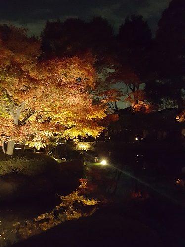 大田黒公園 紅葉ライトアップ 2018