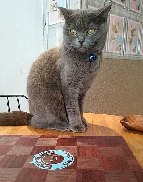 猫カフェ「空陸家(COORIKUYA)吉祥寺店」で癒しの時間