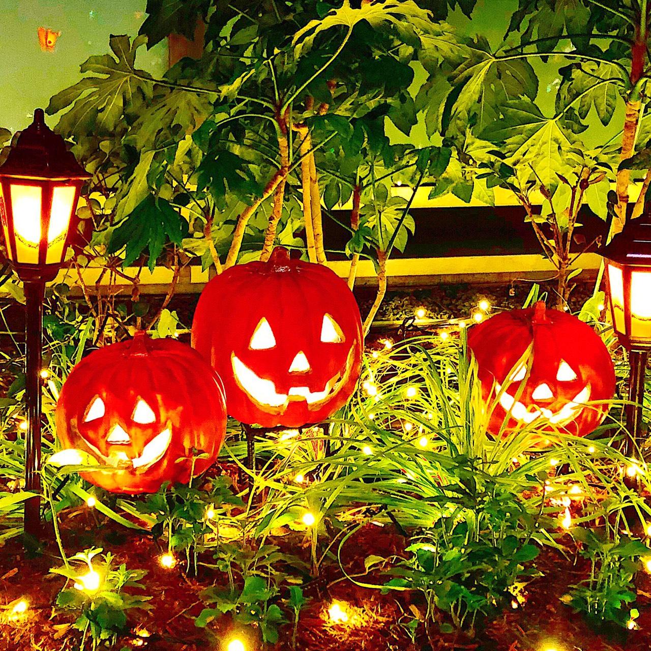 ��Happy Halloween ��