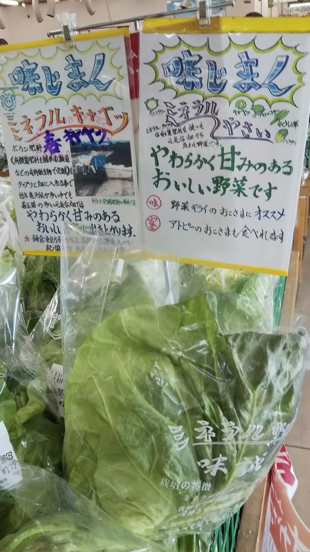 三浦半島とれたて野菜