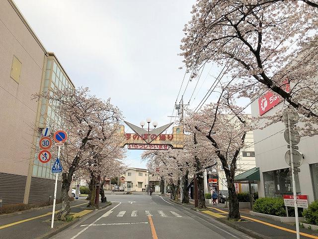 桜満開��~柏市増尾・逆井周辺~