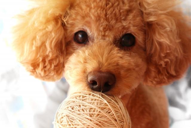 人気の「ペットOK」物件を検索!ペット可賃貸のマナー・ルールも