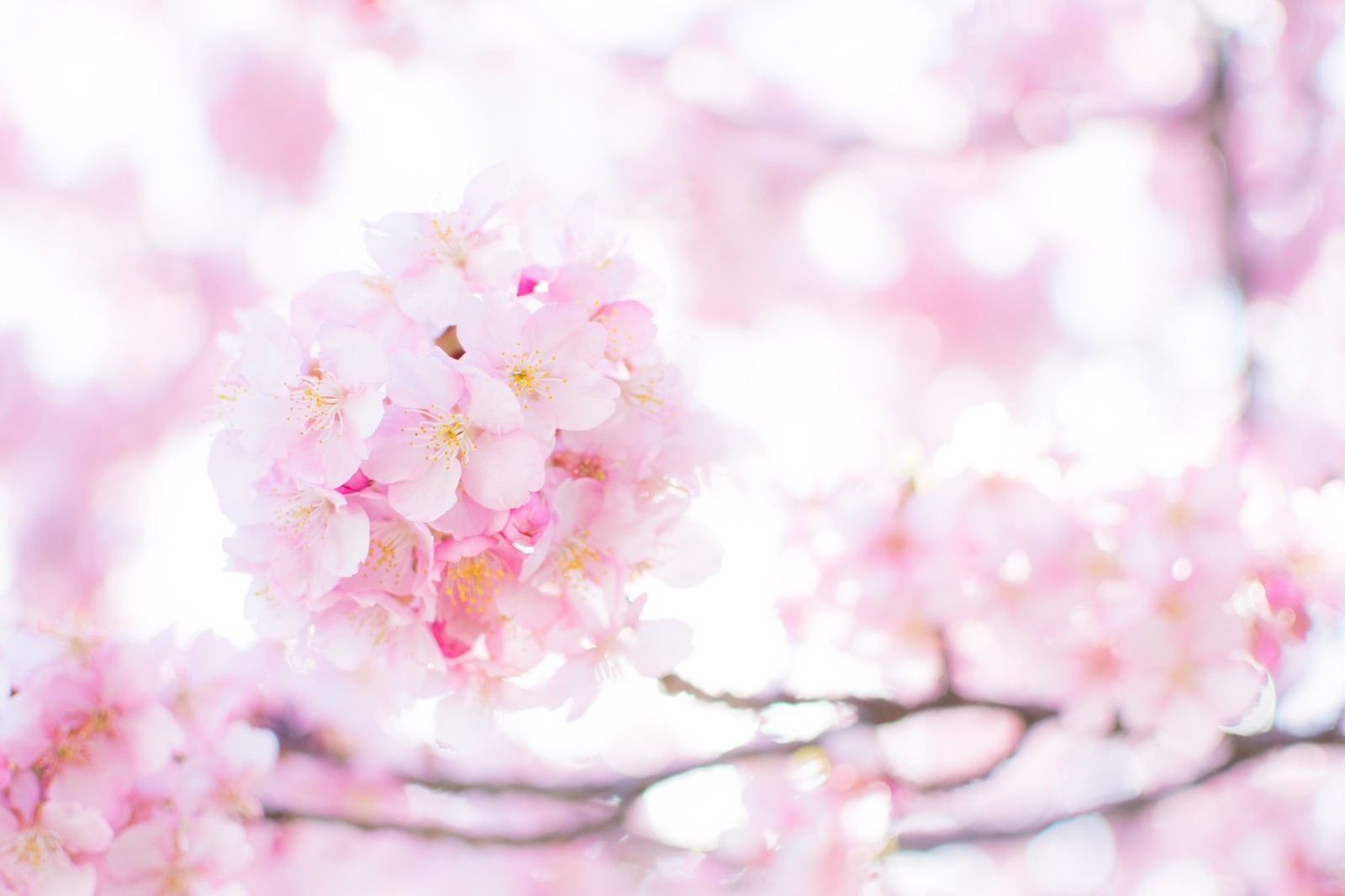 新生活スタートの春ですね(*^^)v