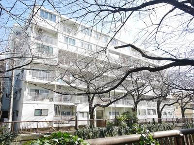 目黒川と桜で春が来るのが楽しみになる物件!