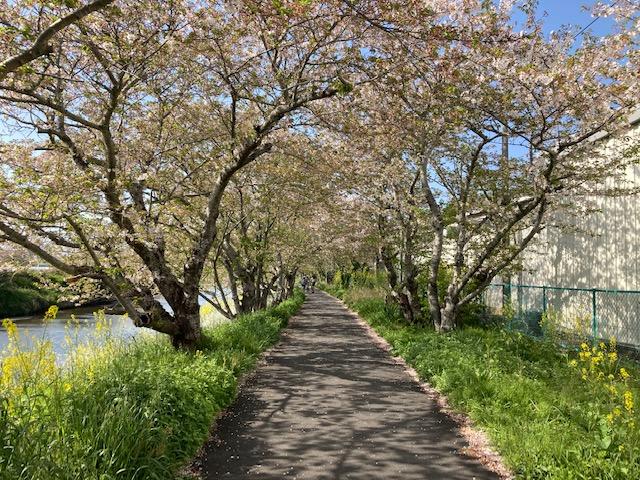 春日和~お散歩��