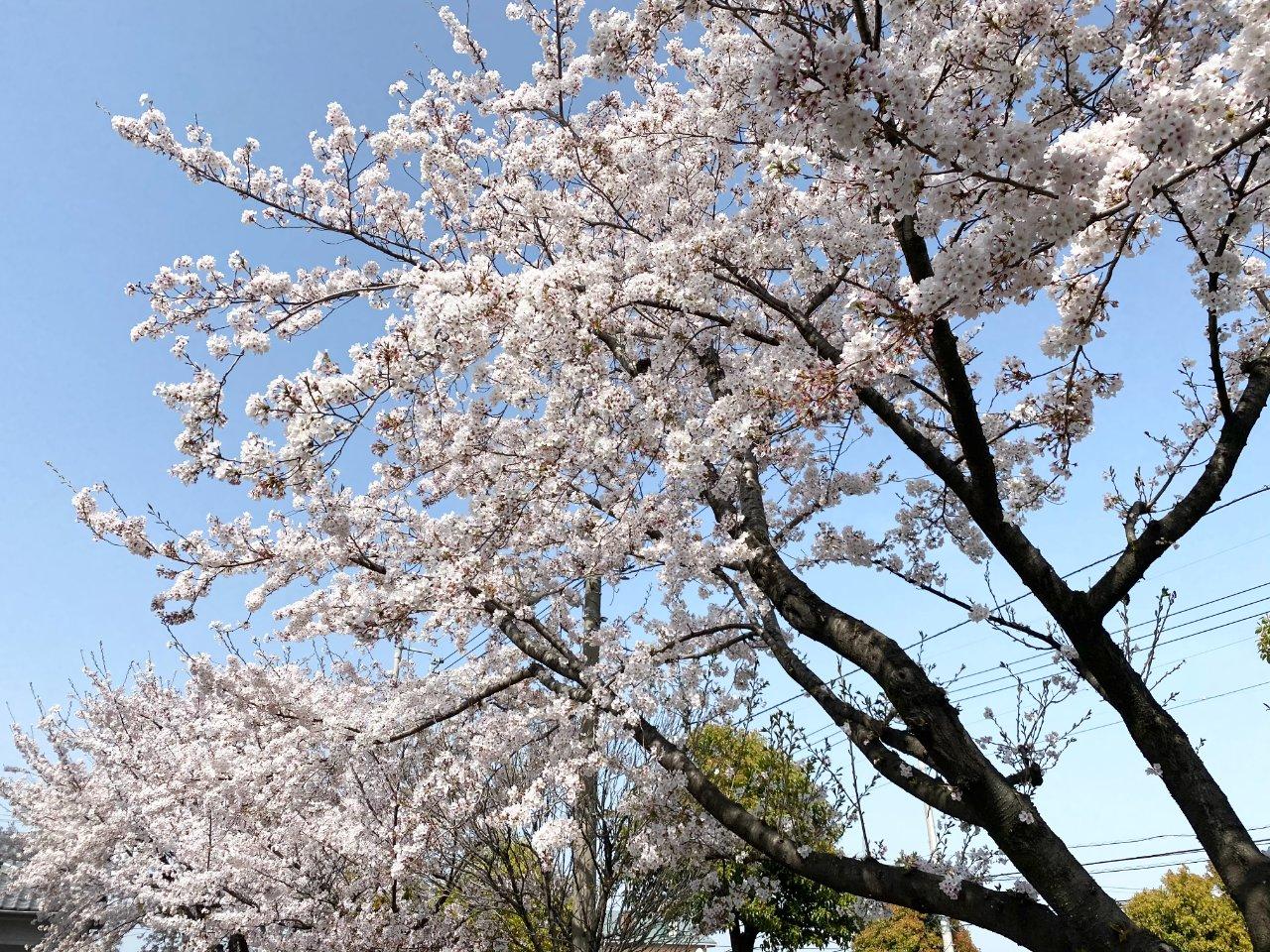 春うらら��