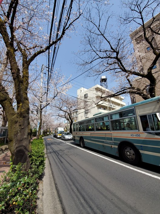 【��桜開花��】~大泉学園通りにて~