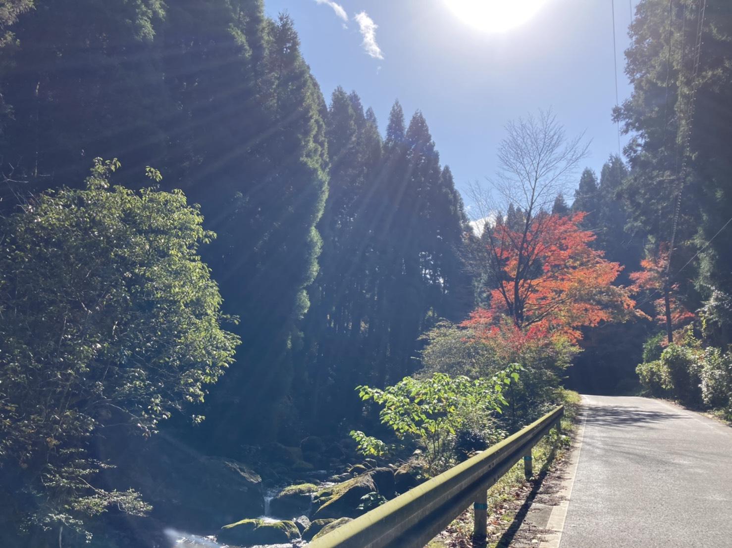紅葉の秋!食欲の秋!